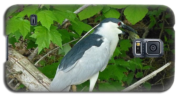 Evening Snack For A Night Heron Galaxy S5 Case by Donald C Morgan