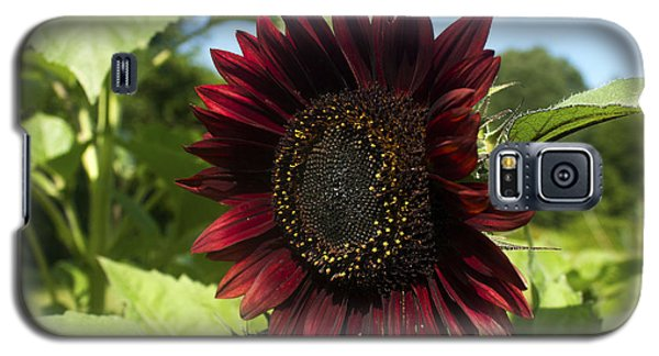 Galaxy S5 Case featuring the photograph Evening Sun Sunflower #1 by Jeff Severson