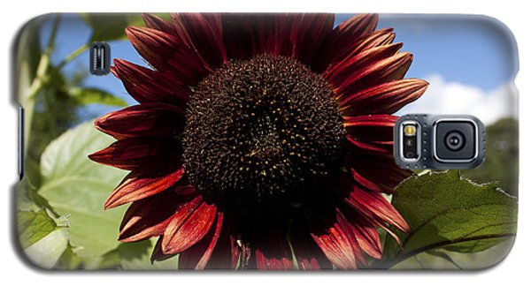 Galaxy S5 Case featuring the photograph Evening Sun Sunflower #2 by Jeff Severson