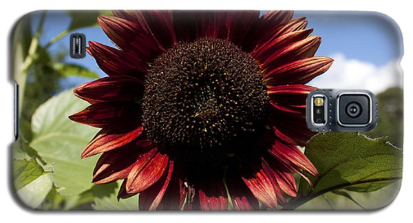 Evening Sun Sunflower #2 Galaxy S5 Case