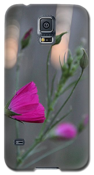 Evening Winecup Galaxy S5 Case
