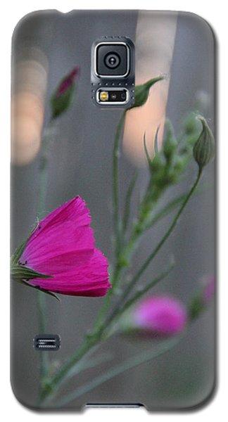 Evening Winecup Galaxy S5 Case by Elizabeth Sullivan
