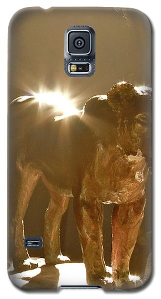 Evening's Light Galaxy S5 Case by Laddie Halupa