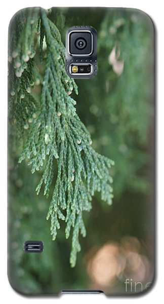 Evergreen Galaxy S5 Case