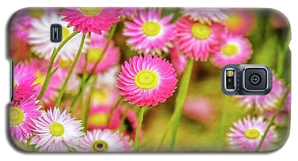 Galaxy S5 Case featuring the photograph Everlasting Daisies, Kings Park by Dave Catley