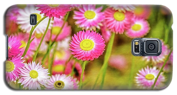 Everlasting Daisies, Kings Park Galaxy S5 Case by Dave Catley