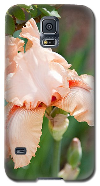 Galaxy S5 Case featuring the photograph Everything Is Peachy by Sherry Hallemeier