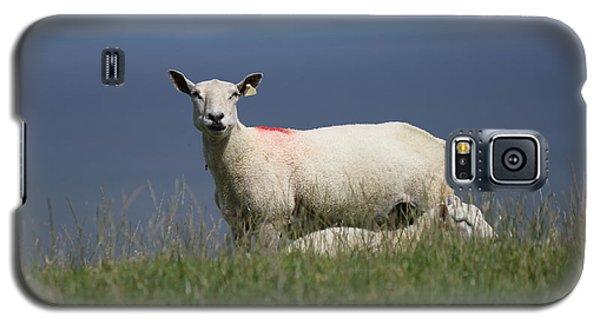 Ewe Guarding Lamb Galaxy S5 Case