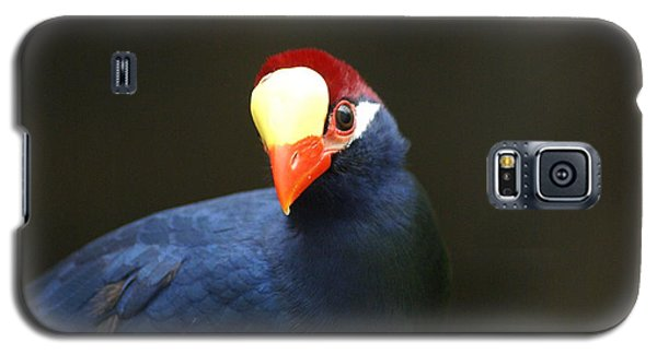 Galaxy S5 Case featuring the photograph Exotic Bird by Heidi Poulin