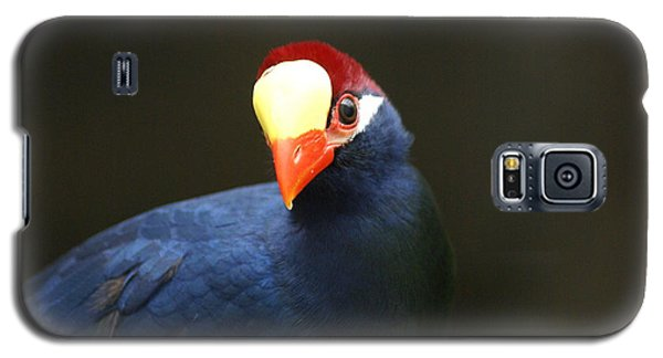 Exotic Bird Galaxy S5 Case