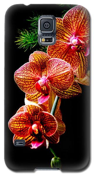 Galaxy S5 Case featuring the photograph Exotic Cascade Of Orchids by Julie Palencia