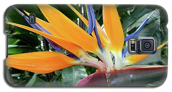 Exotic Bird Of Paradise Galaxy S5 Case