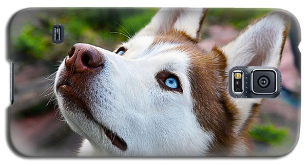 Expressive Siberian  Husky Photo C62017 Galaxy S5 Case
