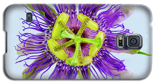 Expressive Yellow Green And Violet Passion Flower 50674b Galaxy S5 Case