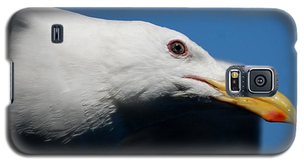 Galaxy S5 Case featuring the photograph Eye Of A Seagull by Sumoflam Photography