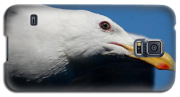 Eye Of A Seagull Galaxy S5 Case