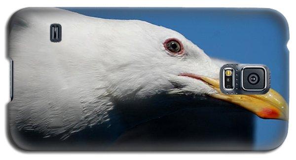 Eye Of A Seagull Galaxy S5 Case