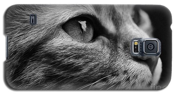 Eye Of The Cat Galaxy S5 Case