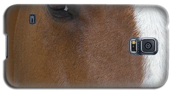 Eye On You Horse Galaxy S5 Case