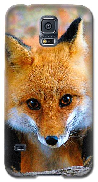 Eye To Eye II Galaxy S5 Case by Adam Olsen