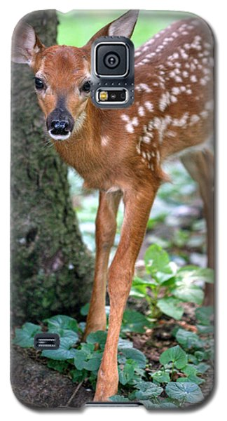 Eye To Eye With A Wide - Eyed Fawn Galaxy S5 Case by Gene Walls
