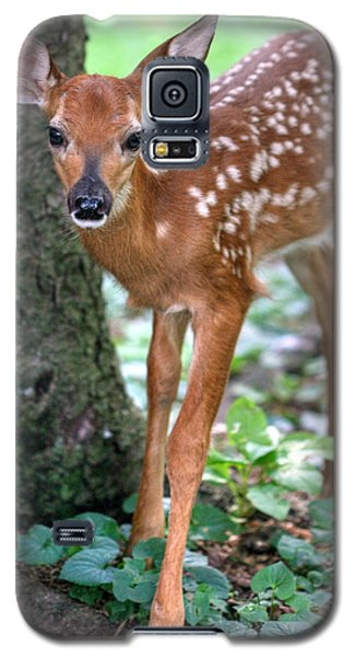 Eye To Eye With A Wide - Eyed Fawn Galaxy S5 Case