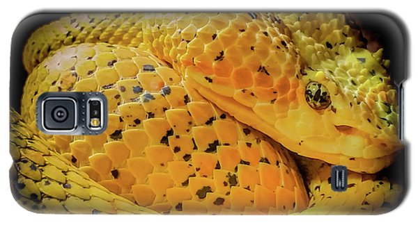Eyelash Viper Galaxy S5 Case by Karen Wiles