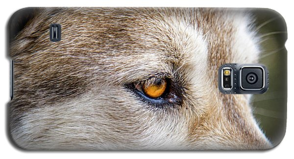 Galaxy S5 Case featuring the photograph Eyes Of The Gray Wolf by Teri Virbickis
