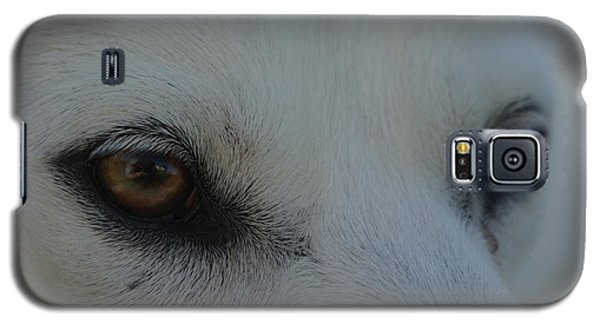 Eyes Of The Wolf - In Her Eyes Galaxy S5 Case by Robyn Stacey