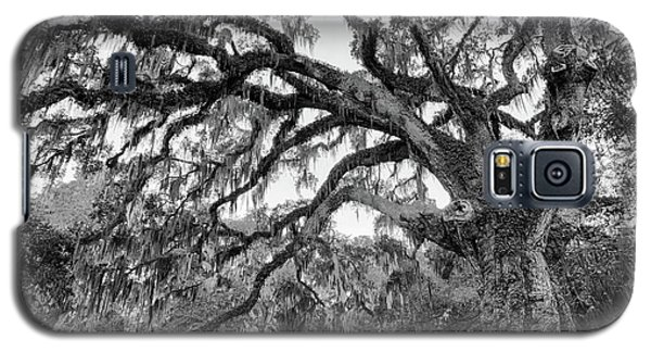 Fairchild Tree Galaxy S5 Case