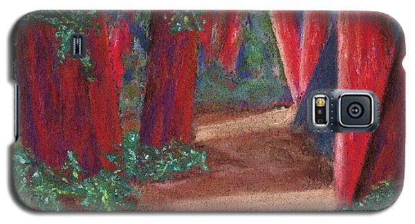 Fairfax Redwoods Galaxy S5 Case