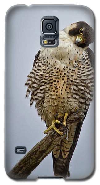 Falcon With Cocked Head Galaxy S5 Case