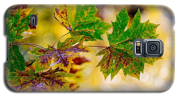 Fall Changes Everything Galaxy S5 Case by MaryJane Armstrong
