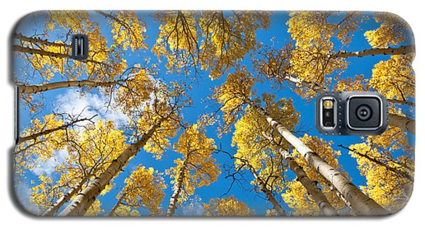 Fall Colored Aspens In The Inner Basin Galaxy S5 Case