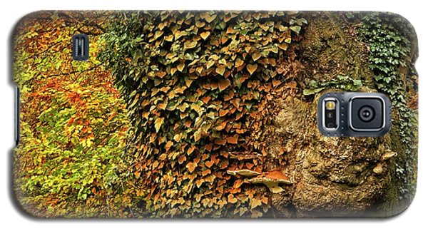 Fall Colors In Nature Galaxy S5 Case