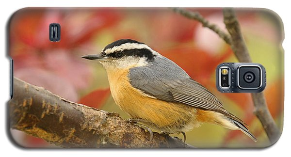 Fall Colors Nuthatch Galaxy S5 Case