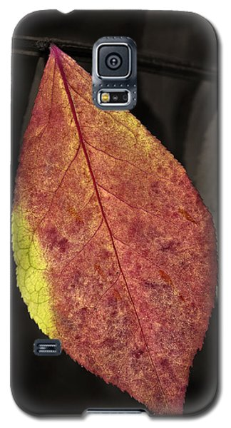 Fall Elder Leaf Galaxy S5 Case