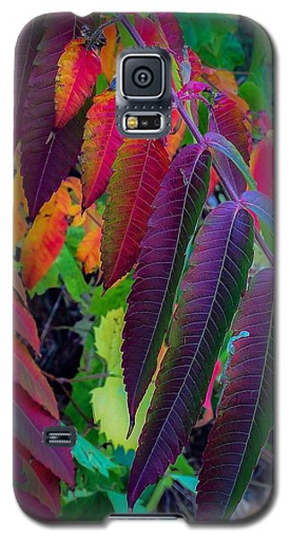 Fall Feathers Galaxy S5 Case