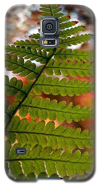 Galaxy S5 Case featuring the photograph Fall Fern by Gwyn Newcombe