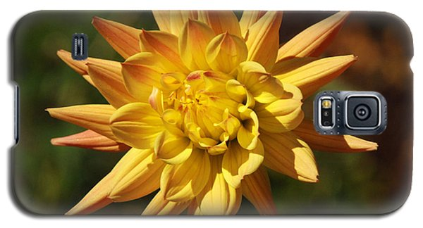 Galaxy S5 Case featuring the photograph Fall Flower by Richard Bryce and Family