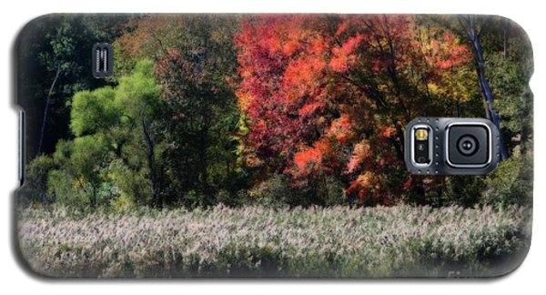 Fall Foliage Marsh Galaxy S5 Case by Smilin Eyes  Treasures