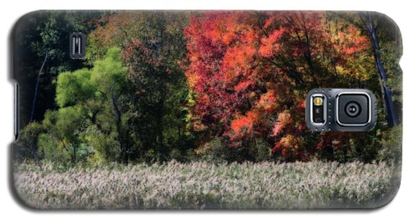 Fall Foliage Marsh Galaxy S5 Case