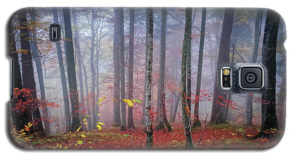 Galaxy S5 Case featuring the photograph Fall Forest In Fog by Elena Elisseeva