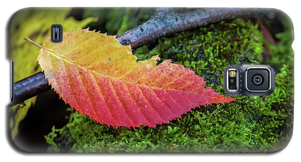 Galaxy S5 Case featuring the photograph Fall From Grace by Bill Pevlor