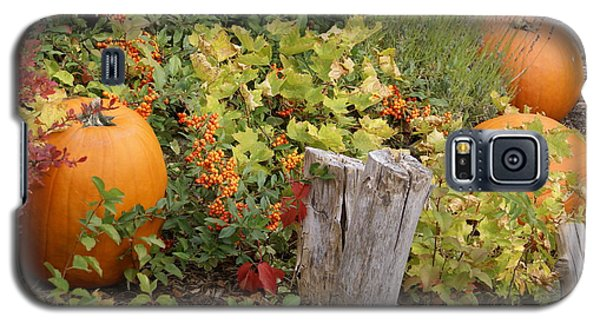 Fall Garden Galaxy S5 Case by Cynthia Powell