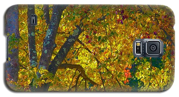 Galaxy S5 Case featuring the photograph Fall Glory On Route 53 by Polly Castor