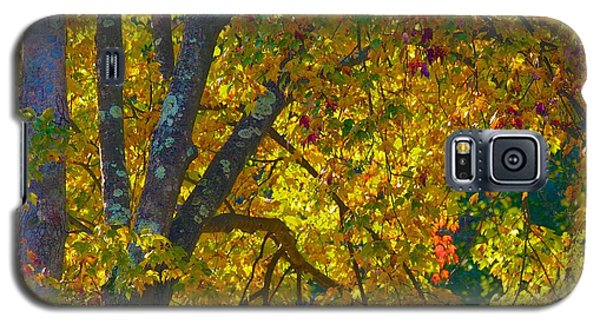 Fall Glory On Route 53 Galaxy S5 Case