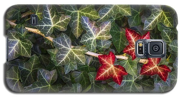 Galaxy S5 Case featuring the photograph Fall Ivy Leaves by Adam Romanowicz