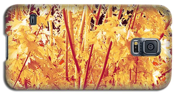 Fall Leaves #1 Galaxy S5 Case