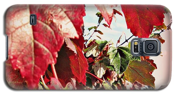 Fall Leaves #10 Galaxy S5 Case